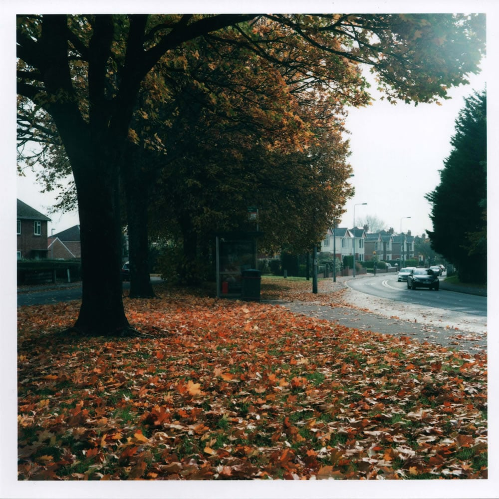 Yashica D - Autumn