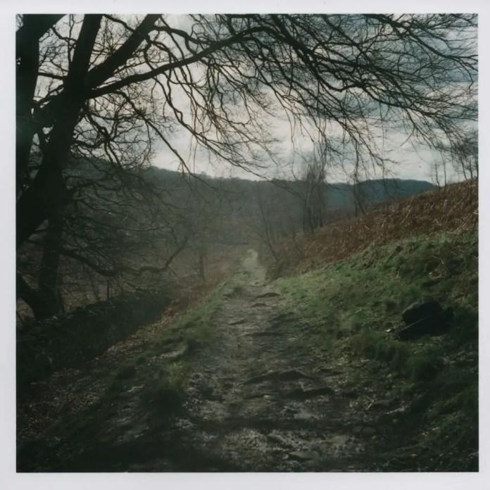 Yashica D - Hillside Path