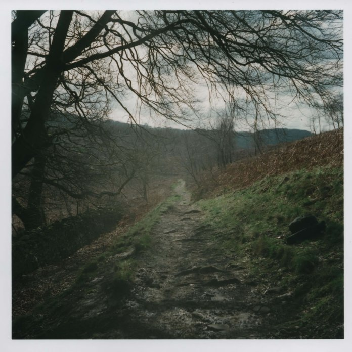 Yashica D - Hillside Path