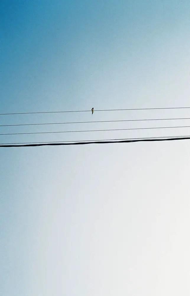 Fujicolor 200 - A lone swallow