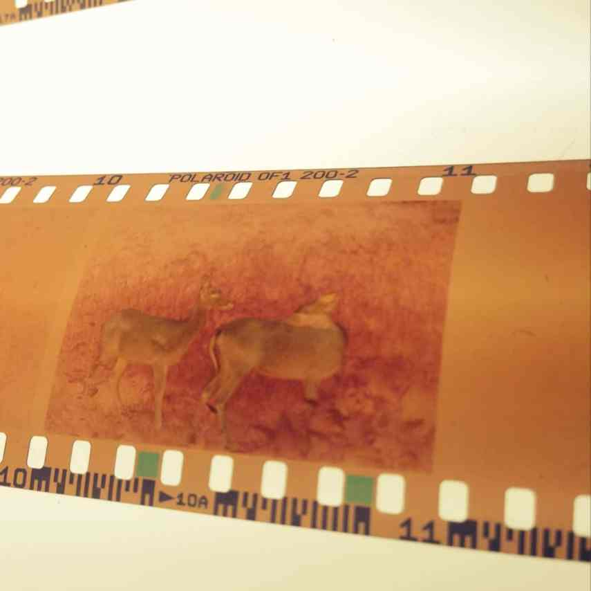 Negative from the very first roll of film I ever shot