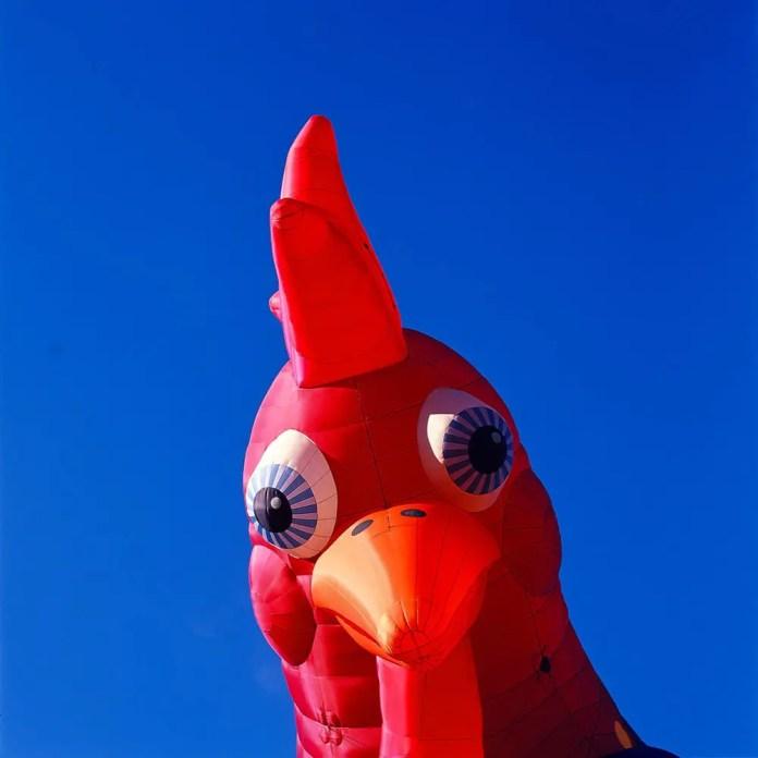 ChickenAF - Shot on Kodak EKTACHROME 100VS (E100VS) at EI 100. Color reversal (Slide) film in 120 format shot as 6x6.