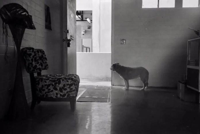 ken 🌿 - @kookthecat whatcha lookin' at, doggo?canon 7, ilford pan f+ (rated 50), xtolat @HungryEar in kakaʻako @summerfilmparty #summerfilmparty #home