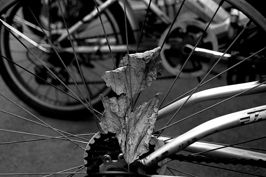 01 Lucky New SHD 100 - EI 100 under exposed