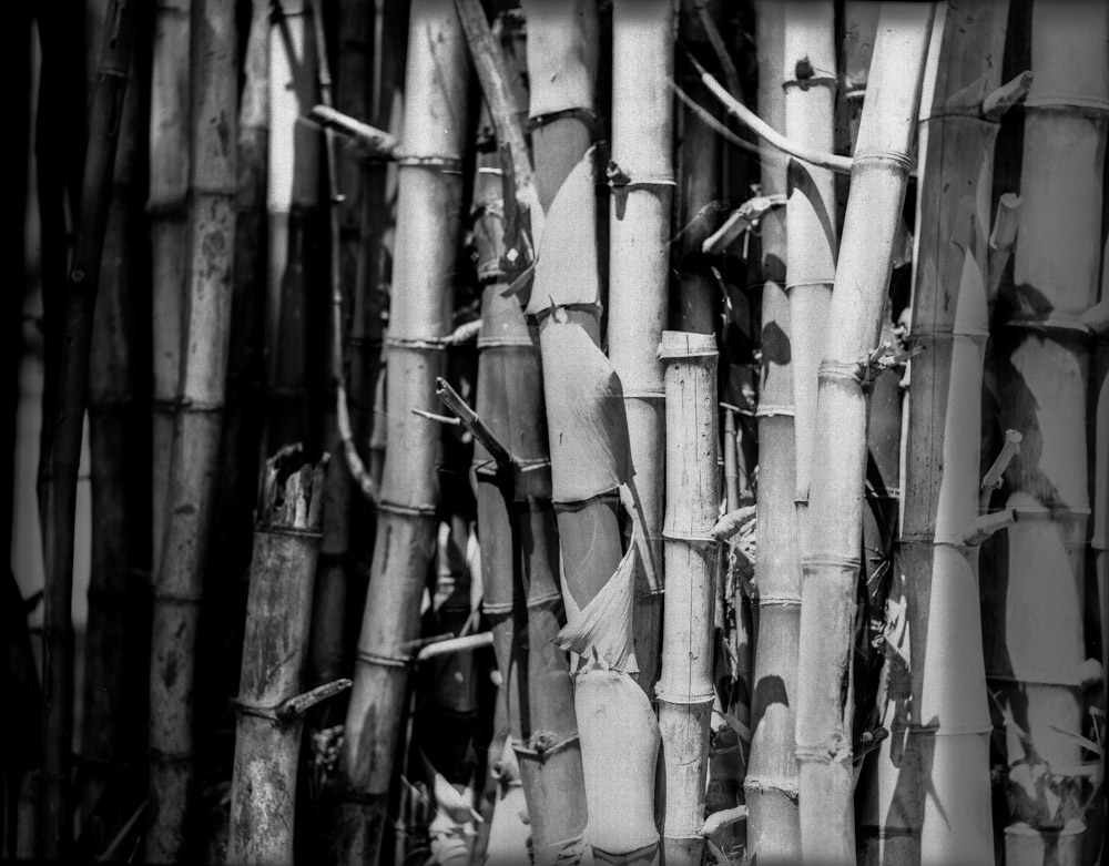 Bunched up - Shot on Rollei INFRARED 400 at EI 12 (4x5) | EMULSIVE