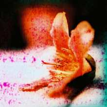 Derased - Shot on Kodak EKTACHROME 100VS (E100VS) at EI 100. Color reversal (slide) film shot as 6x6 - Cross processed