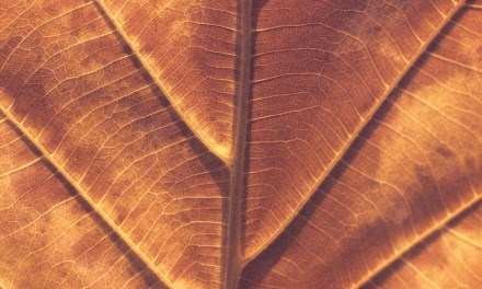 Dried veins #01 + #02 – Rollei Vario Chrome (35mm)