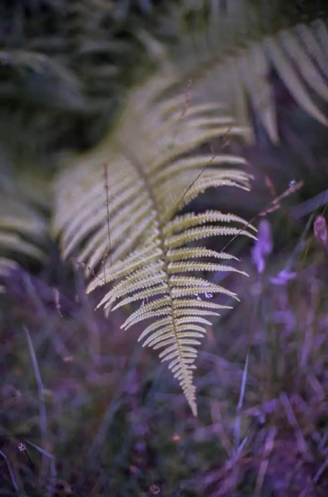 "Tim Dobbs - @timdobbsphoto ""Fern"" .. Nikon F90 on Kodak Ektar #SummerFilmParty #believeinfilm #closeup @EMULSIVEfilm #filmsnotdead"