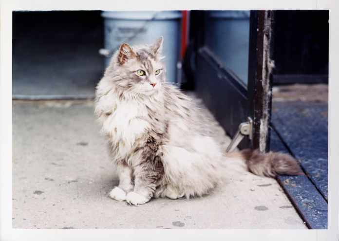 New York 2017 Kodak Ektar 100 @ 100,35 negative format Canon EOS3 /Carl Zeiss ZE 85mm f1.4