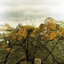 Lomography Color Negative 100 - Mamiya C220 - Rock detail DoF