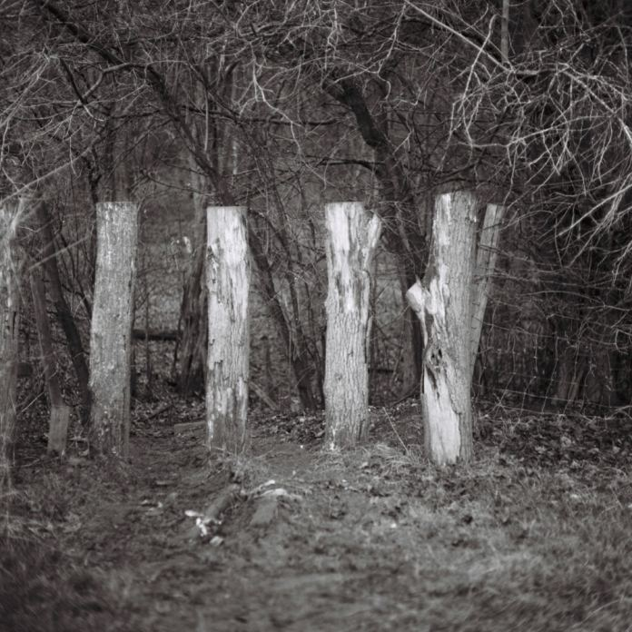 Upright Logs, December 2016 - Mamiya C330 with ILFORD FP4+ (Expired 12-2002)