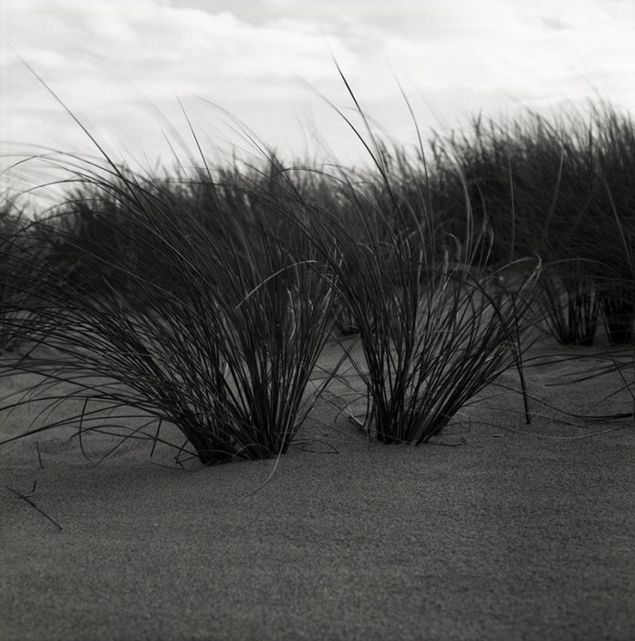Mamiya C220 Professional TLR - Marram Grass