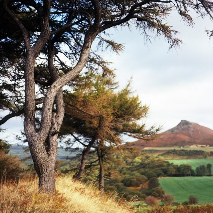 Mamiya C220 Professional TLR - Roseberry Topping
