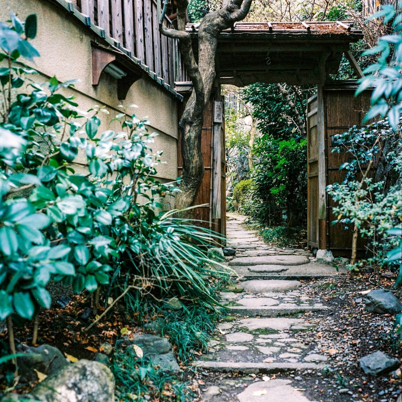 Side entrance - Shot on Kodak Portra 400 at EI 400. Color negative film in 120 format shot as 6x4.5.