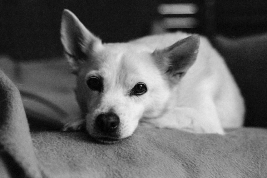 My Brother's Dog - Nikon F3, Nikon 50mm f/1.4, ILFORD HP5 PLUS