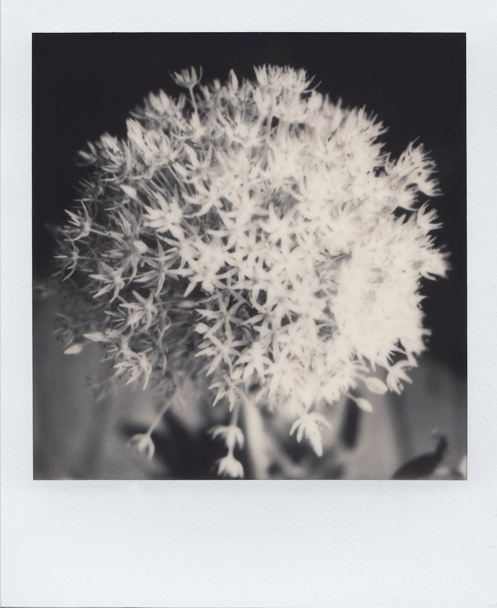 Photo No. 7 - Polaroid SX-70 Land camera, model Alpha 1, The Impossible Project B&W film
