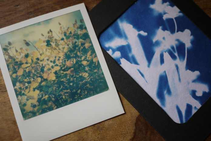 Left: Smartphone photo transformed into a Polaroid 600 using Impossible Project Instant Lab, 2016. Right: Handmade cyanotype photogram of a botanical specimen, 2016