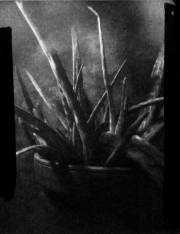 Toby Van de Velde - Expired Agfa Fibre Based Multi Contrast paper and the Ceramic Pinhole Camera