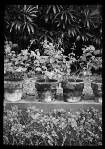 ORWO UN54 16mm film - Plants