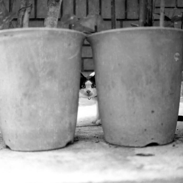 Whassatden? - Shot on Konica Pan 100 at EI 100. Black and white negative film in 120 format shot as 6x6.