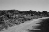 Road Bend - ILFORD Delta 100 Professional (-)