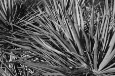 Yucca - ILFORD Delta 100 Professional (0)