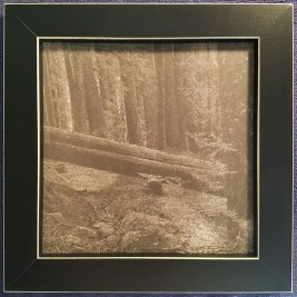 An introduction to Platinum/Palladium printing - Rainer Framed