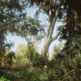 Garden, Cinestill 50D, Rolleicord II Triotar.