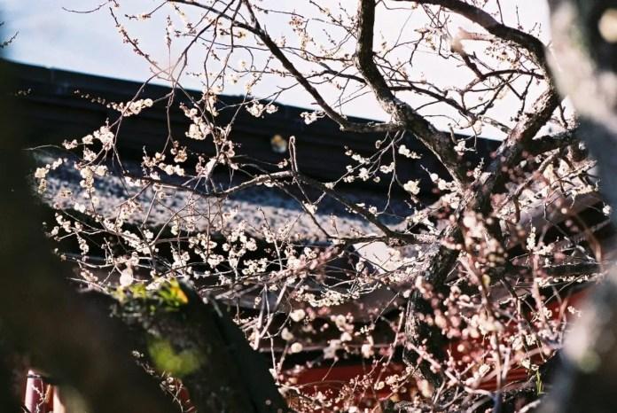 Off peak - Shot on Fuji Superia Premium 400. Color negative film in 35mm format film.