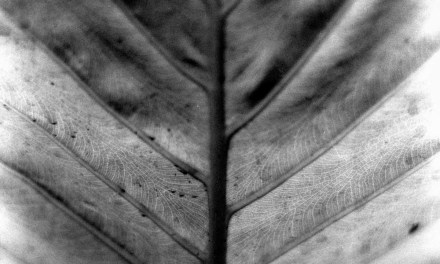 Veins #02 – Shot on Rollei Superpan 200 at EI 200 (120 format)