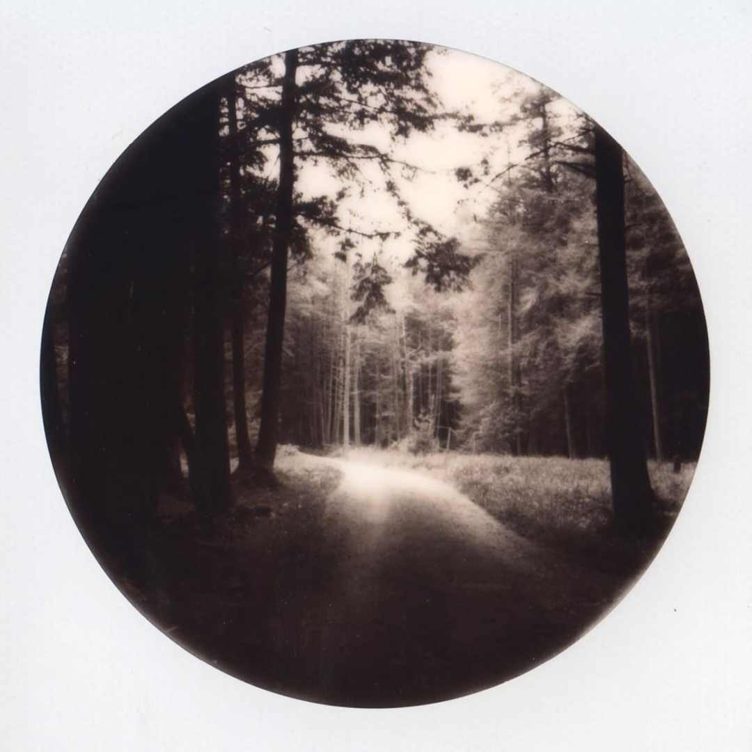 Cook's Forest - Polaroid SX-70 and Impossible Project Round Frame film
