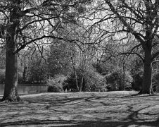 Abington Park - ILFORD XP2 Super (C-41 processing by Skears)