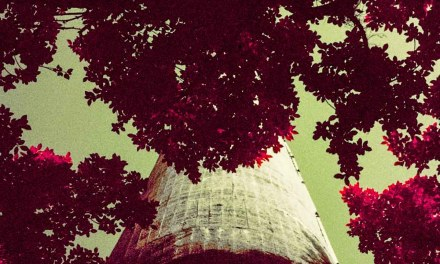 From below – Shot on Kodak AEROCHROME III 1443 (35mm format)