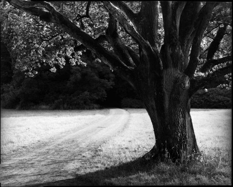 Park scene, Rodenstock Apo-Ronar 300mm, yellow filter, Ilford HP5+ in HC-110 B