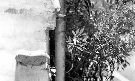 Super absorbent – Shot on Kodak EASTMAN DOUBLE-X 5222 at EI 400 (35mm format)