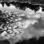 5 Frames With… Adox CMS 20 II (EI 20 / ID-11 / Nikon F4S) – by Toni Skokovic
