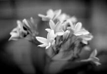 Splash - Shot on Efke KB25 at EI 25. Black and white negative film in 35mm format.