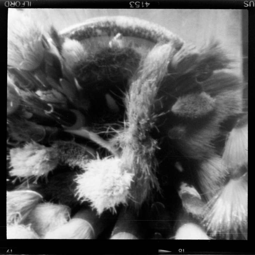 ILFORD HP5 PLUS - Bristling