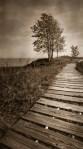RealitySoSubtle 6x12 review - Andre Kohler State Park Boardwalk and trees 1