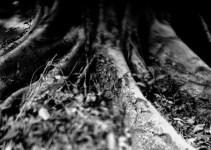 Photography: Stumps #02 – Shot on Bergger Pancro 400 at EI 200 (4×5 format)