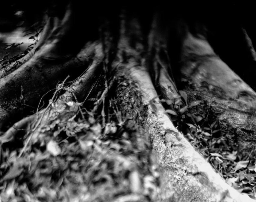 Stumps #02 - Shot on Bergger Pancro 400 at EI 200. Black and white film in 4x5 format. Graflex Pacemaker Speed Graphic, Kodak Aero Ektar 178mm f/2.5. Orange 21 filter.
