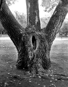 Edworthy Park - Kodak Tri-x 320TXP