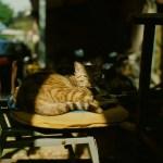 My spot - Shot on Fuji Provia 100F (RDP III) at EI 100. Color reversal (slide) film in 120 format shot as 6x4.5.