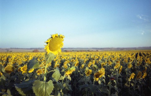 5 Frames With... Kodak Gold 200 (EI 200 / 35mm / Olympus LT-1) - by Matt Murray