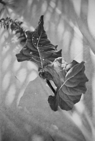 Kodachrome 25 (EI 1.5 / 35mm / Canon EOS3) - by Richard Kowalski