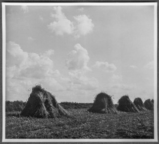 Hay stacks, August 1944, Rolleicord on Isopan Film, f8, 1-100 sec 001