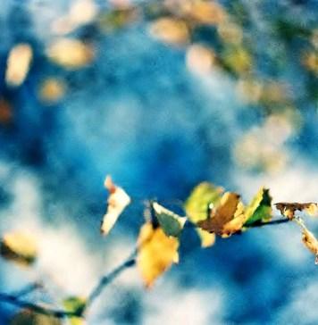 5 Frames With... Kodak EKTACHROME 160T (EI 100-150 / 35mm / Zenit TTL) - by Lucy Wainwright