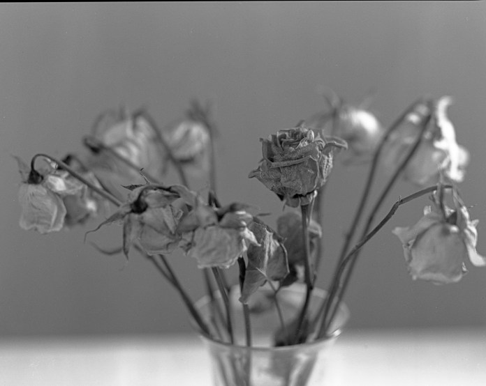 Roses - developed in the SP-8x10+ Rev2