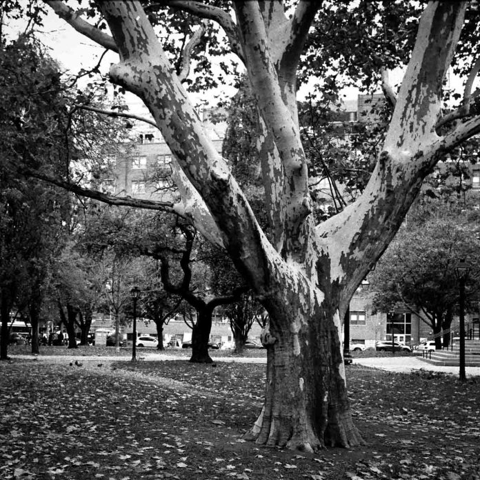 5 Frames With... ILFORD HP5 PLUS (EI 1600 / 35mm / Nikon FE) - by Barry Hitterman