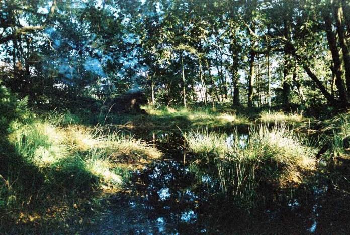 Lucy Wainwright - A Pool near Derbyshire, UK